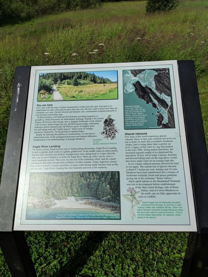 04 Natural History of Amalga Meadows Alaska.jpg