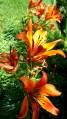 06 Jensen Olson Arboretum Alaska Flowers