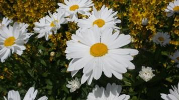 07 Jensen Olson Arboretum Alaska Flowers