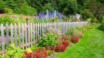 13 Jensen Olson Arboretum Alaska Flowers