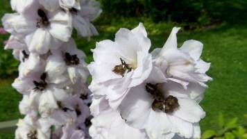 14 Jensen Olson Arboretum Alaska Flowers