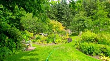19 Jensen Olson Arboretum Alaska Flowers