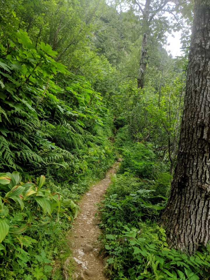 15 Mount Juneau Alaska Hiking Trail.jpg