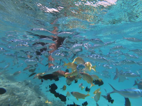 Alexis-Chateau-Snorkelling-23