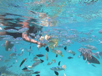 Alexis-Chateau-Snorkelling-24