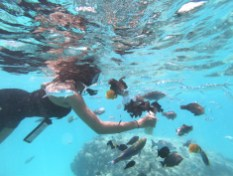 Alexis-Chateau-Snorkelling-Fish-Feeding-31