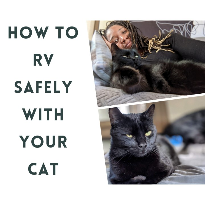 RV Vlog | How To Travel Safely With Cats