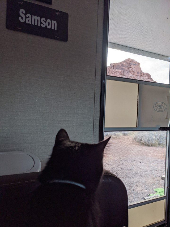 Cat Travel Tips | How To Protect Your Pets From Heat Exhaustion When Alone in the RV