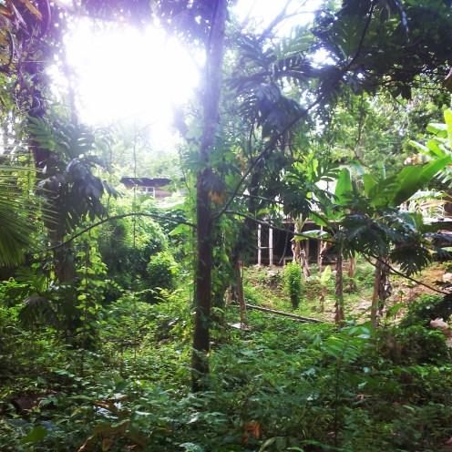 jamaica childhood home travel nature