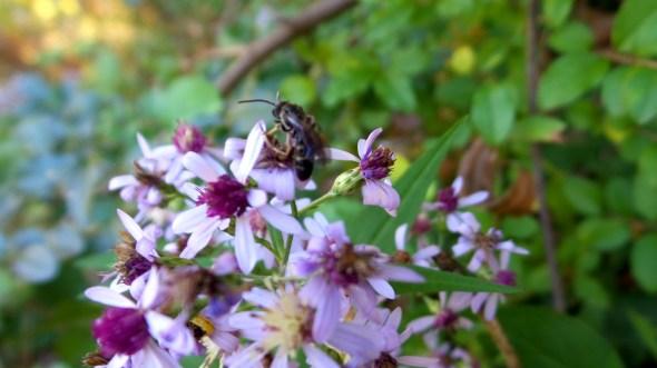 bee autumn flowers nature travel