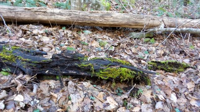 travel log nature