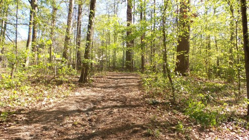 23 Depende Park Hiking Trail