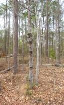 Tiki Man Tree 1