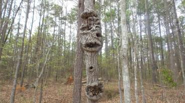 Tiki Man Tree 3