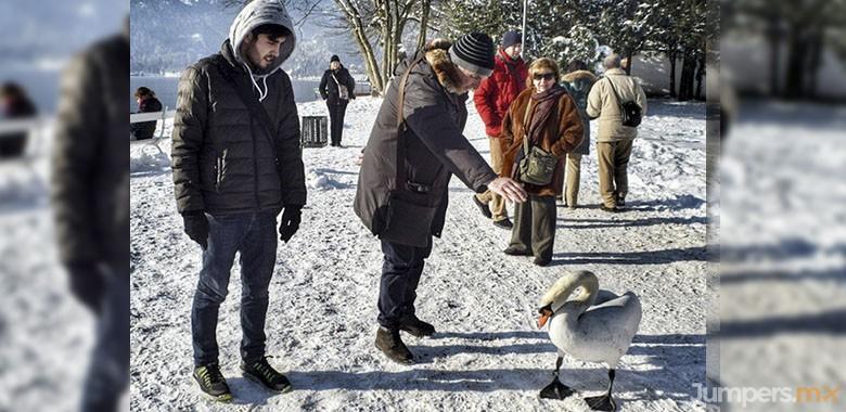 cisnes-bled-swan-jumpers