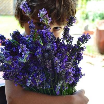 [:en]My garden in July[:ro]Gradina mea in Iulie[:]
