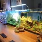 水草水槽と熱帯魚、イモリと亀もいる癒やしのバー。Aquarium bar Kind