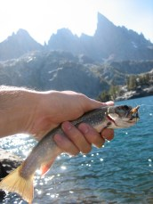 9/6/07: Brook trout caught on Chad's trip to Banner Peak via the Sierra High Route. Minaret Lake, CA