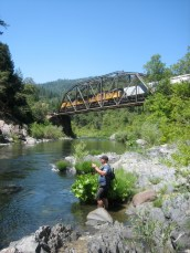 7/30/11: Tim on the chase. Upper Sacramento River, CA