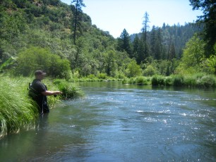 8/1/11: Wading is often required where the bank is brushy. Pit River, CA