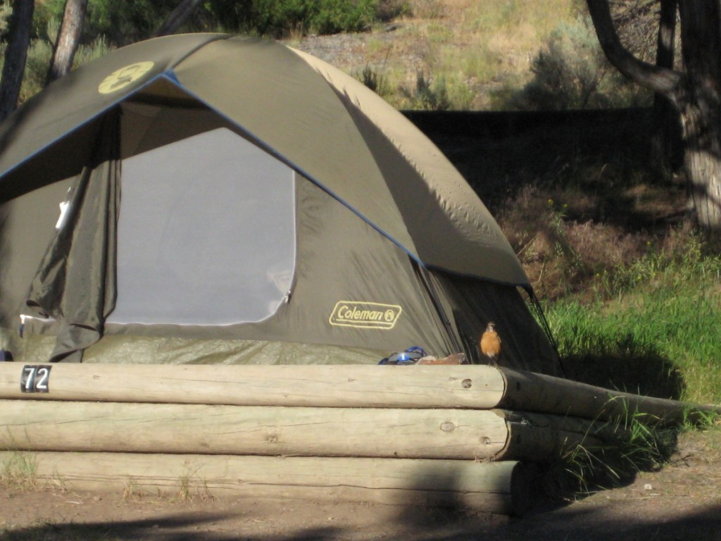 Yellowstone National Park Camping: The Ultimate Guide | Alex on the Map