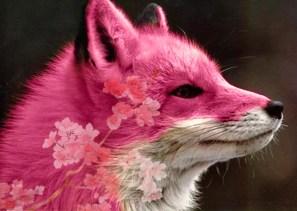 fox-red-edit