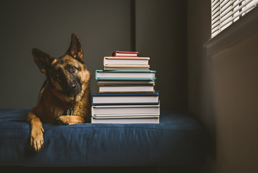 Dog with wedding albums