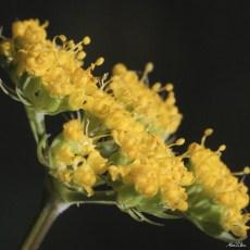 alexpullenwildflowers-4011