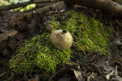 Alex Pullen Telluride Mushroom Festival photography-3748