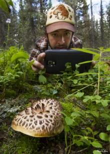 hawkswings mushroom Sarcodon imbricatus colorado