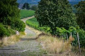 Steinberg path