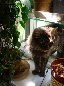 Harriet, a brown and gray cat, standing in a bay window surrounded by houseplants.