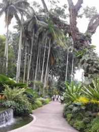 Tall trees along the path. Туннель из тропической зелени - 2.