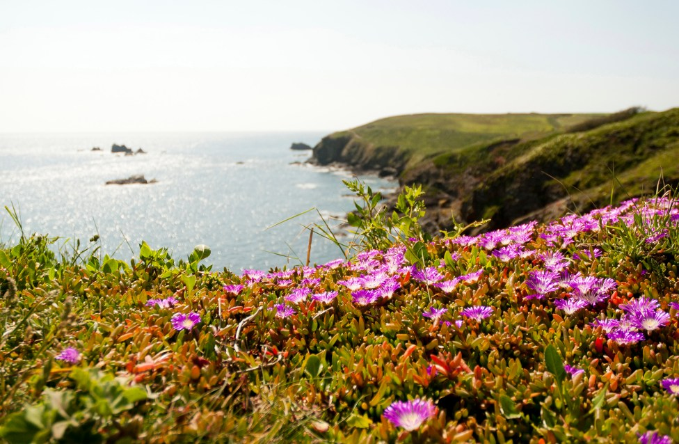Lizard: looking west westcountry cornwall kernow landscape sea sun