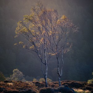 Lake District Calendar Autumn