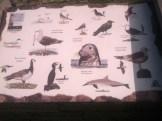 Fauna de la zona