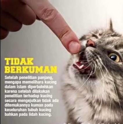 Hukum Memelihara Kucing Dalam Ajaran Syari At Islam Al Fikeer