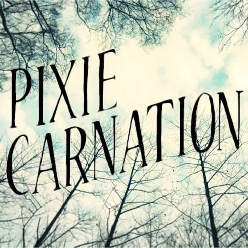 pixie carnation