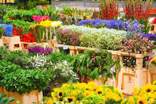 MIN de Rungis visite du pavillon des fleurs