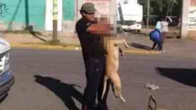 Photo of Hombre ahorca a perro en Ecatepec; 'podía morder a alguien'