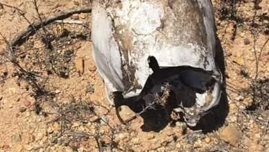 Photo of Encuentran cuerpos y restos humanos en varias partes de Tijuana