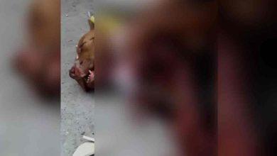 Photo of Indigna video de policía que mata a perro durante operativo