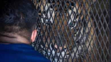Photo of Revisan a animales del Parque Morelos