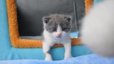 Photo of Nace Garlic, el primer gato clonado
