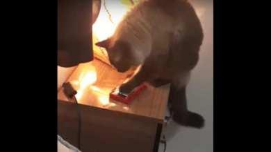 Photo of VIDEO: Descubre que se quedaba dormida porque su gato apagaba la alarma