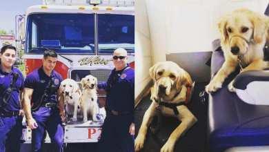 Photo of Perros de apoyo reconfortan a víctimas de tiroteo en El Paso, Texas
