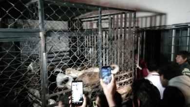 Photo of Multa de hasta 1.2 millones para la 'mataperros' de Puebla