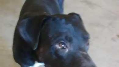 Photo of Denuncian que en el Ayuntamiento de Mexicali se roban perros