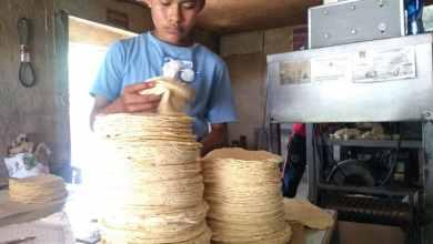 Photo of Ley contra maíz híbrido encarecería precio de la tortilla