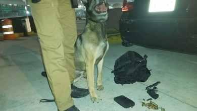 Photo of Aduana de Tijuana detecta armas y droga en garitas